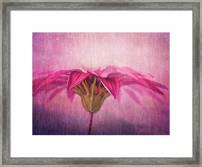 Framed Print featuring the photograph Spring Blush by Amy Weiss
