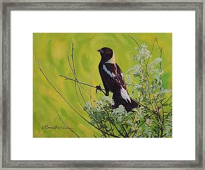 Spring Bobolink Framed Print by Bruce Morrison
