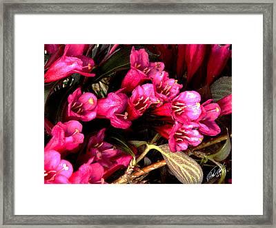 Spring Bouquet Framed Print