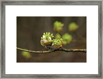 Spring Buds 9365 H_2 Framed Print