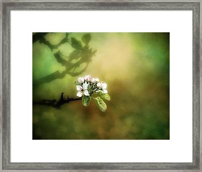 Spring Buds Framed Print