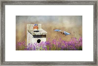 Framed Print featuring the photograph Spring Builders by Lori Deiter