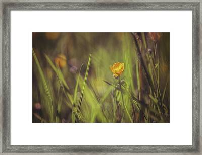 Spring Buttercup Framed Print