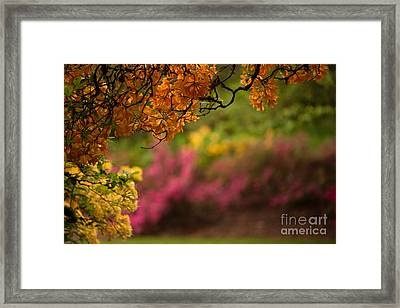 Spring Canopy Framed Print by Mike Reid