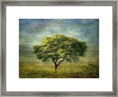 Spring Canvas Framed Print by Jessica Jenney