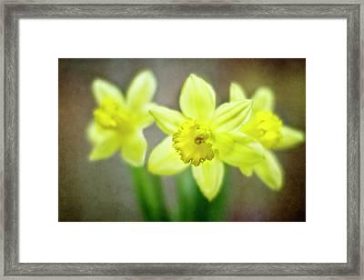 Spring Chorus Framed Print by Rebecca Cozart