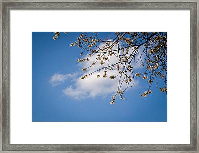Spring Cloud Framed Print by Andy Smy