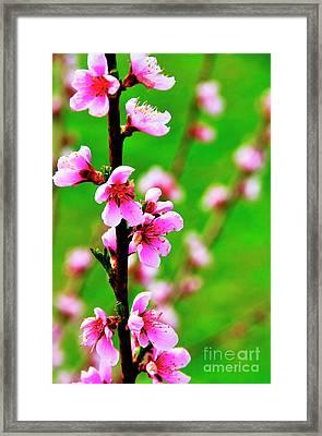 Spring Color Framed Print by Thomas R Fletcher