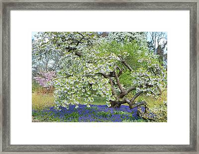 Framed Print featuring the photograph Spring Color by Tim Gainey