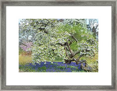 Spring Color Framed Print by Tim Gainey