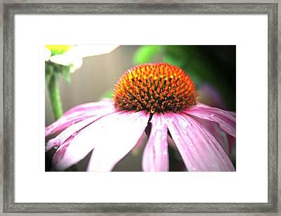 Spring Colors Framed Print by Becca Brann