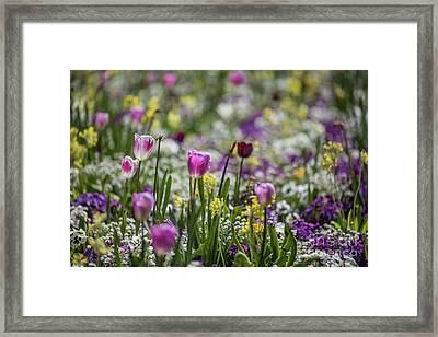 Spring Colors Framed Print by Eva Lechner