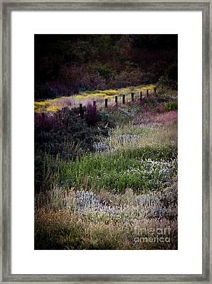 Framed Print featuring the photograph Spring Colors by Kelly Wade