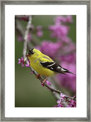 Spring Colors Framed Print