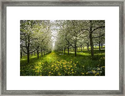 Spring Colors1 Framed Print by Bruno Santoro