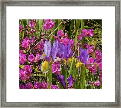 Spring Colour Framed Print