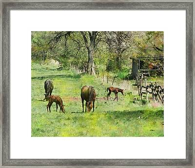 Spring Colts Framed Print
