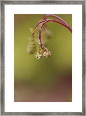 Framed Print featuring the photograph Spring Coming 2017 by Jeff Burgess