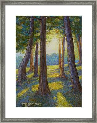 Spring Comes To Indian Point Framed Print by Tanja Ware