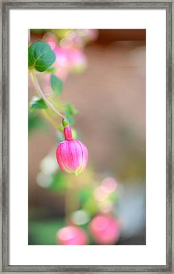 Framed Print featuring the photograph Spring Comes To South Carolina by Corinne Rhode