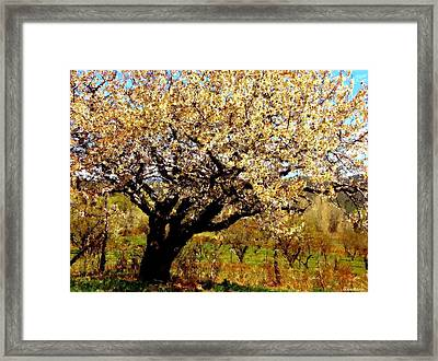 Framed Print featuring the photograph Spring Comes To The Old Cherry El Valle New Mexico by Anastasia Savage Ealy