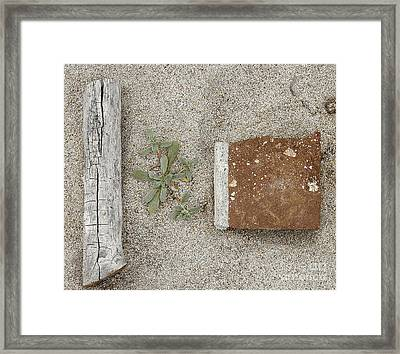 Spring Comes Framed Print by Viktor Savchenko