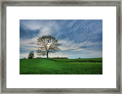Framed Print featuring the photograph Spring Coming On by Bill Pevlor