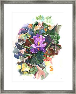 Spring Crocus Framed Print by Nancy Watson