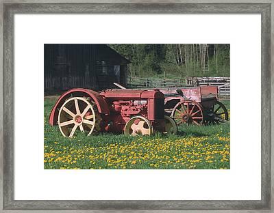 Spring Dandelions Framed Print