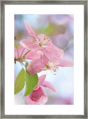 Spring Delight Framed Print by Jenny Rainbow