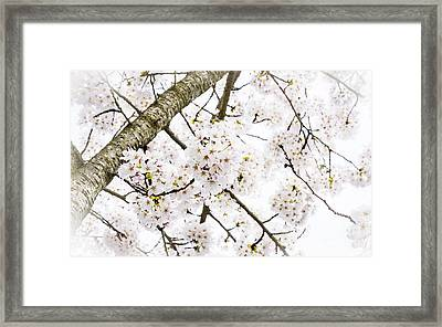 Spring Dogwood Blossoms Framed Print by MaryJane Armstrong