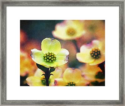 Spring Dogwood Framed Print