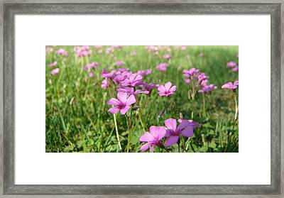 Framed Print featuring the painting Spring Dream by Andrew King