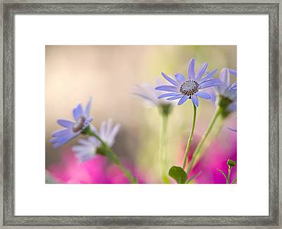 Spring Dreams Framed Print by Dorothy Lee