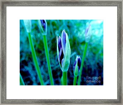 Framed Print featuring the photograph Spring Erupting Early by Marsha Heiken