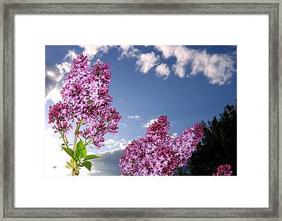 Spring Evening Framed Print by Will Borden