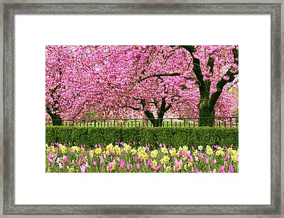 Framed Print featuring the photograph Spring Extravaganza by Jessica Jenney
