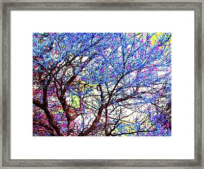 Framed Print featuring the photograph Spring Fantasy by Susan Carella