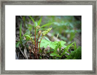 Spring Ferns Framed Print