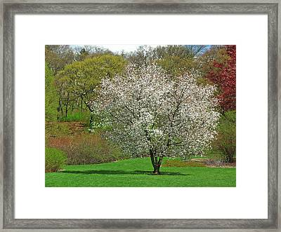 Spring Fever Framed Print by Juergen Roth