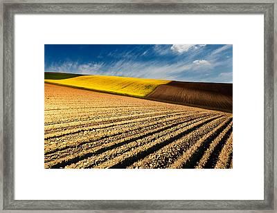 Spring Fields Framed Print by Evgeni Dinev