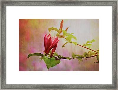 Spring Flare Framed Print