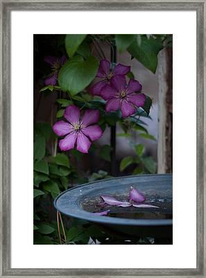 Spring Fling Framed Print by John Schuller
