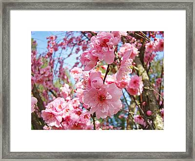 Spring Floral Art Prints Pink Tree Blossoms Framed Print by Baslee Troutman