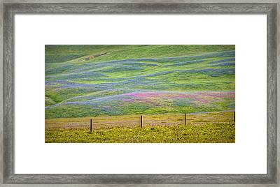 Spring Flower Bloom  Framed Print