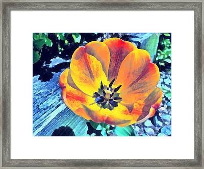 Framed Print featuring the photograph Spring Flower Bloom by Derek Gedney