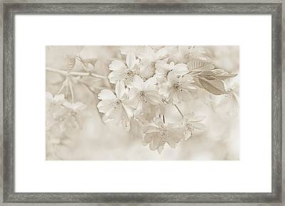 Framed Print featuring the photograph Spring Flower Blossoms Soft Brown by Jennie Marie Schell