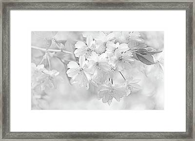 Framed Print featuring the photograph Spring Flower Blossoms Soft Gray by Jennie Marie Schell