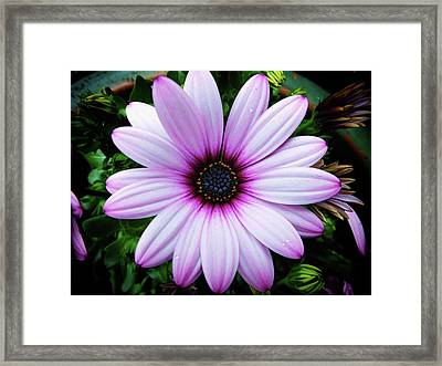 Spring Flower Framed Print by Karen Stahlros