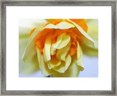 Spring Flower Framed Print by Paul  Trunk